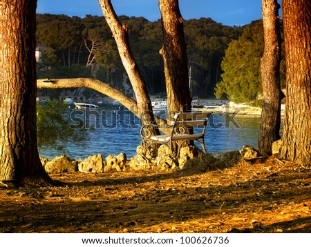 Bench under pine trees with a view to the beautiful bay  known as Cikat, island Losinj, Croatia.