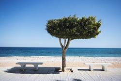 Bench under tree on sunny beach in Altea, Spain