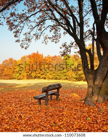 Bench with tree in autumn
