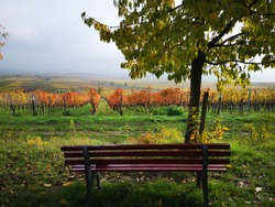 Bench with view on vineyards during autumn, near St. Martin, Palatinate forest, Germany