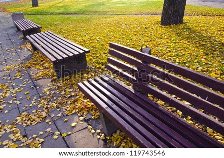 benches group in autumn park and morning sunlight