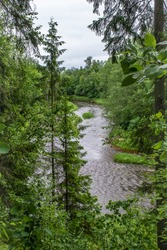 Bend of the Ogre River. Top of spruce trees. Cloudy weather on summer day. Latvia nature.