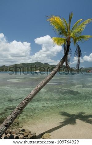 Bending palm tree on tropical beach at Isla Grande. Costa Arriba, Colon province, Panama, Caribbean, Central America.