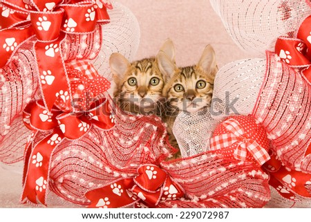Bengal kitten inside red and white wreath with paw print ribbon on light pink background