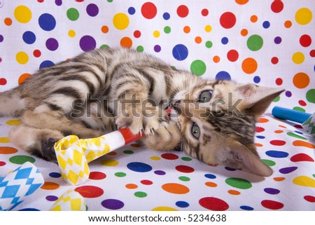 Bengal kitten on rainbow polka dot background and Happy Birthday noise makers