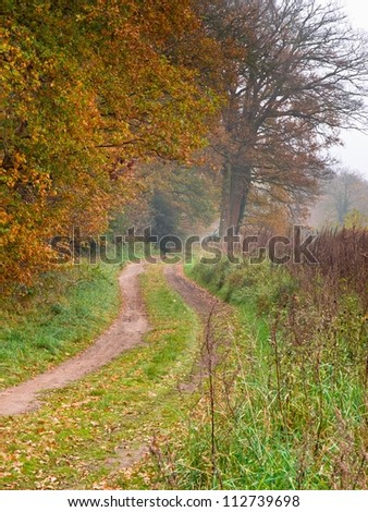 bent forest lane during autumn