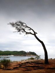 bent tree by the effect of the coastal wind, with the sea and a few white houses in the background