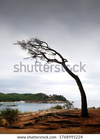 bent tree by the effect of the coastal wind, with the sea and a few white houses in the background Stockfoto ©