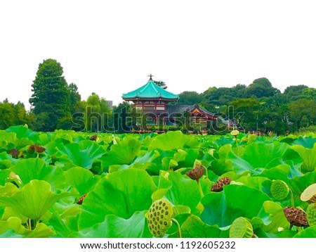 Bentendo and lotus pond in Ueno park, Tokyo, Japan ストックフォト ©