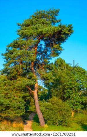 Berlin, Germany - Panoramic view of the Berlin Dahlem Botanical Garden and Museum - Botanischer Garten - with a pine tree Zdjęcia stock ©