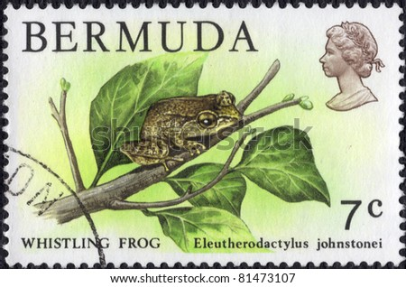 BERMUDA - CIRCA 1978:A stamp printed by unknown shows a Whistling Frog (Eleutherodactylus johnstonei) circa 1978