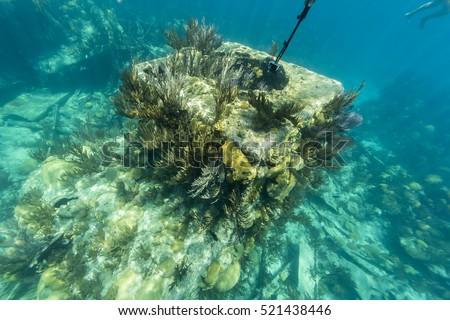 Bermuda Island #521438446
