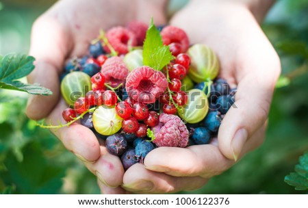 Stock Photo Berries and fruit. Ripe fruit in the palm of a young girl. Raspberries, strawberries, gooseberries, red currants, blueberries.