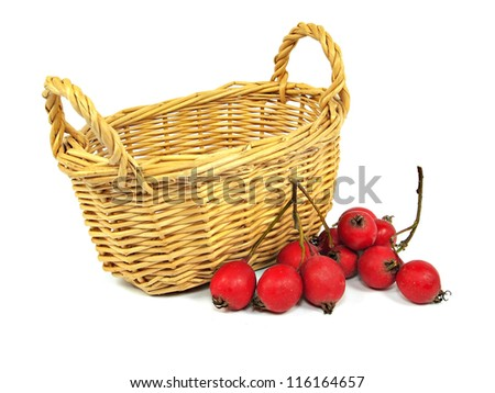 Berries of a Hawthorn and basket on a white background