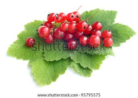 Berries of a red currant with leaves on a white background
