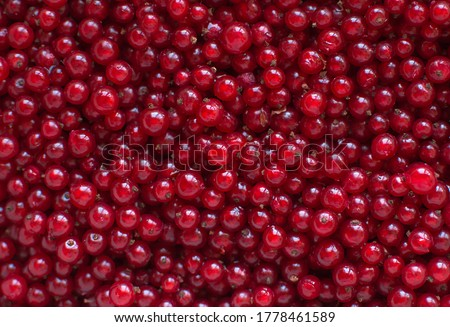 Berries of red currant in the top view. Background with red currants. Close-up of red berries. Foto stock ©