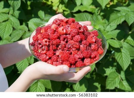 Berry a raspberry against a raspberry bush