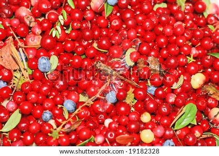 berry background #19182328