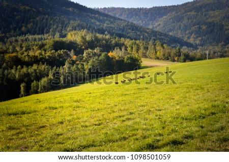 Beskid ma?y. Karpaty, Polska, summer, mountains,  Zdjęcia stock ©