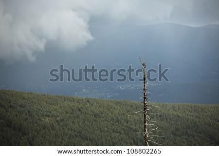 Beskydy Mountains in rain, Czech Republic