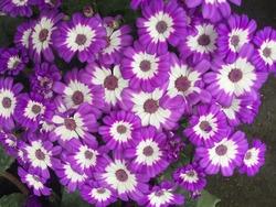 Best brilliant Blossom flowers.Pokhara dhaulagiri nepal, Mar 28-2021
