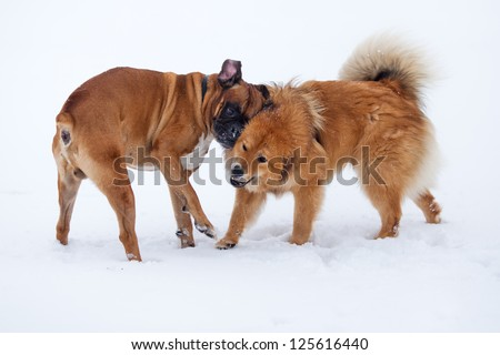 best dog friends playing in the snow