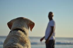 best friend pet dog beach