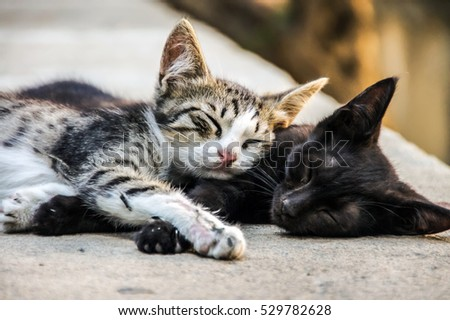 Best friends concept. Two sweet little kittens sleeping lazy on street. Friends together fun. Forever friends cats. Two cute little kittens. Best cats friend. Best friend Sleeping cats