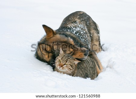 Best friends. Dog hugging cat in the snow outdoor