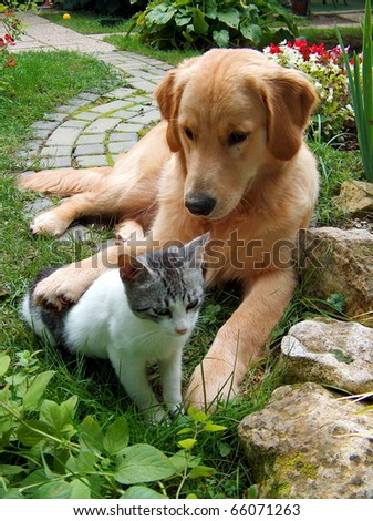 Best friends. Domestic cat and golden retriever in a hug.