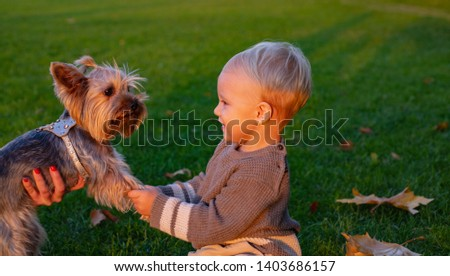 Best friends forever. Happy childhood. Sweet childhood memories. Child play with yorkshire terrier dog. Toddler boy enjoy leisure with dog friend. Small baby toddler walk with dog. True friendship.