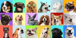 Best friends. Young dogs, pets collage. Cute doggies or pets are looking happy isolated on multicolored background. Studio photoshots. Creative collage of different breeds of dogs. Flyer for your ad.