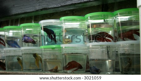 Wal mart mistreating their fish babygaga for Betta fish for sale at walmart