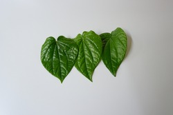 Betel leaf isolated on white background (In Indonesian it called daun sirih). Betel leaf can be use as medicine for some health issue.