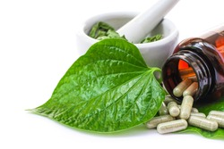 Betel leaf ( Piper sarmentosum, Wildbetal leafbush ) with herbal capsules pill and ceramic mortar isolated on white background. Natural alternative medical herbal plant and supplement concept.