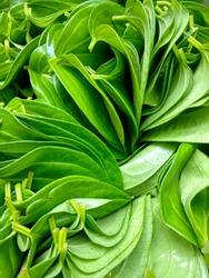 Betel leafs in a beautiful pattern of arrangement.