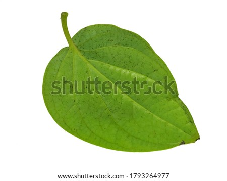 Betel Leaves isolated on white background, Exotic tropical leaf, Large green leaf, Colorful foliage, Green leaf isolated, leaves, foliage, Defective leaves, Betel leaf,  Piper betle