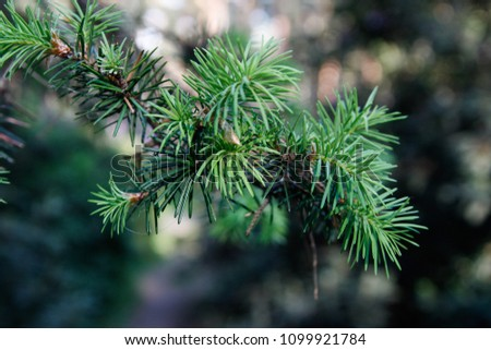 Beuatiful depth of tree of needles tree. Trees branch located in a small countryside park. #1099921784