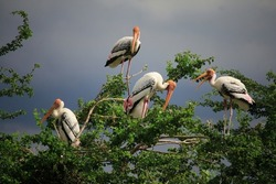 beutiful and happy group of stork birds resting on trees