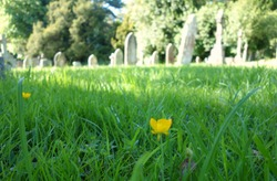 Beutiful blurry photo of church cemetery graveyard for background use, Christianity concept. Space to add text on unfocussed long green grass with small yellow flowers blooming in spring summer day.
