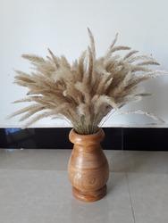 beutifull iluk flower (Mana) in srilanka