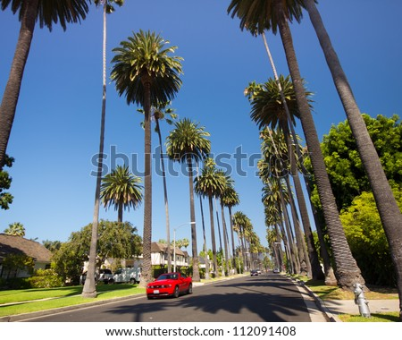 BEVERLY HILLS, CA - AUG 10:  Palm tree lined street in Beverly Hills, Ca on Aug. 10, 2012. Beverly Hills is world-famous for its luxurious culture and famous residents.