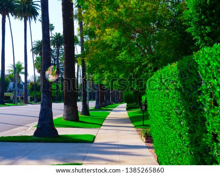 Beverly Hills road with a lot of green bushes and tall palm trees. Trees and nature in the city. Green street with sidewalks. Neighborhood with green trees and tall palm trees. Walkway in luxury area.