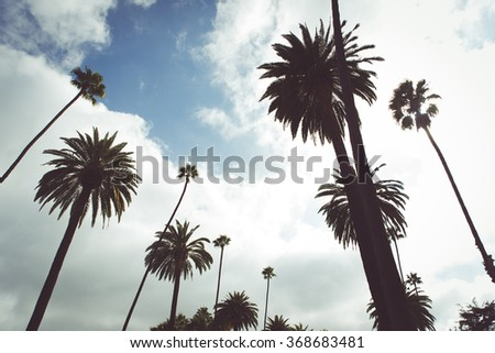 Beverly hills street and palms. Typical californian trees. Concept about travels and places
