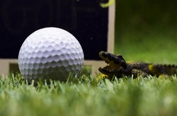 Beware Alligators in golf course.