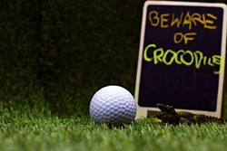 Beware alligators or crocodiles sign in golf course with golf ball on green grass
