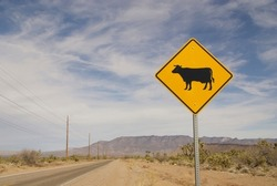 beware of cattle on the road