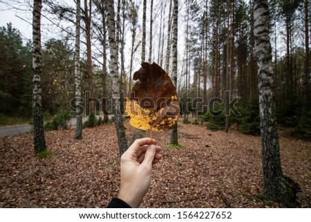 Bialowieza Forest in the Autumn Zdjęcia stock ©