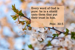 Bible quotes on blurred blooming nature background. Every word of God is pure: he is a shield unto them that put their trust in him. Card text sign for believers. Inspirational verse praying thought.