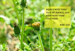 Bible quotes on dandelion flowers background. Motivation card text for Lord Christ believers. Inspirational verse for praying. Rejoice with them that do rejoice, and weep with them that weep. Rom. 12:15